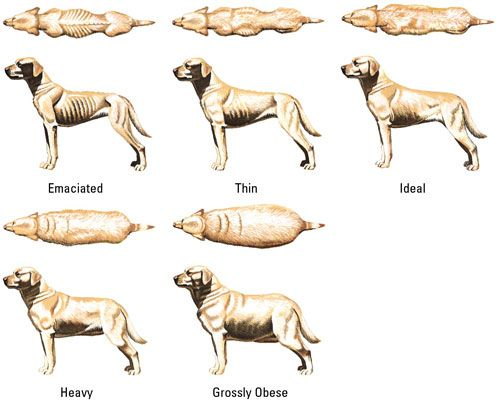 Pin By Billy T Anderson On Canine Health Pinterest Dogs Dog