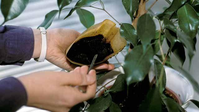 Kaffeesatz Enthalt Wertvolle Nahrstoffe Uber Die Sich Deine Pflanzen Freuen Daher Nicht Wegwerfen Sondern Als Du Kaffeesatz Gemuseanbau In Kubeln Bepflanzung
