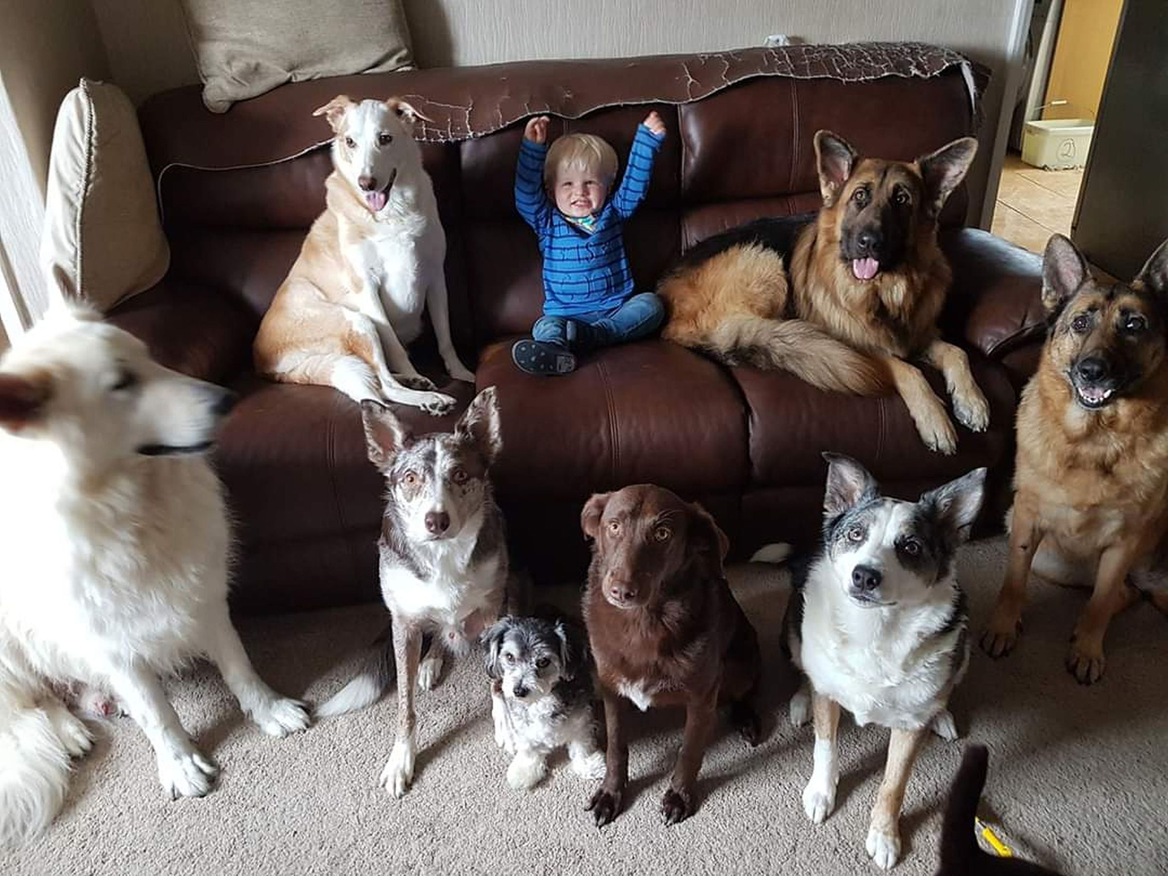 Patient Pet Owner Gets Her 17 Cats And Dogs To Pose For A
