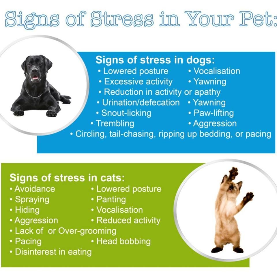 Signs Of Stress In Your Pet Vets On Call In 2020 Sick Pets Vets Your Pet