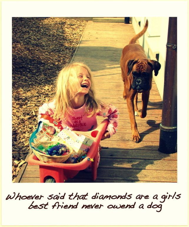 Boxers Are A Girl S Best Friend Boxer Love Boxer Dogs Therapy Dogs