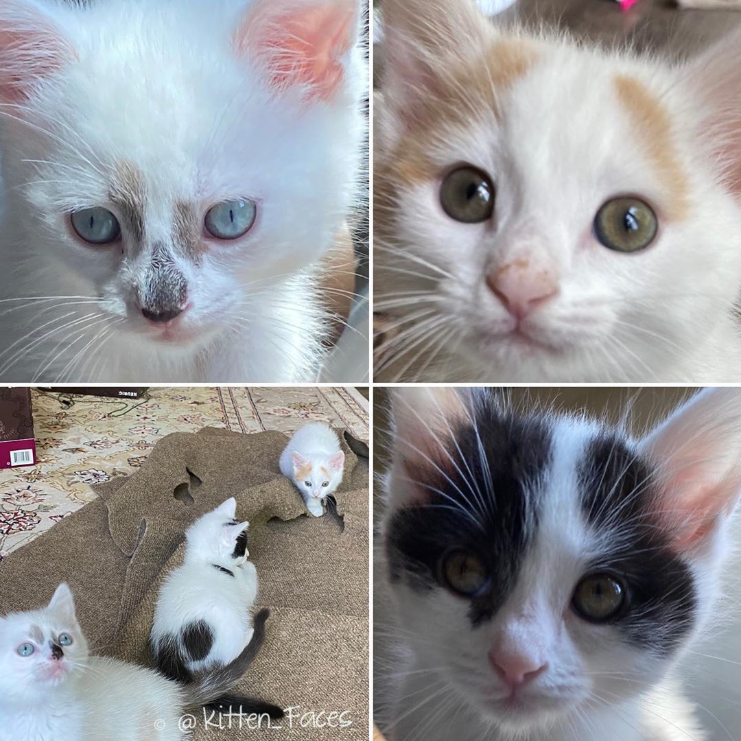 Happy 8 Week Birthday To Us Brunchbunchkittens 7 Signs Your Cat Might Be Pregnant That You Should Definitely Pay Att In 2020 Small Kittens Little Kittens Cats