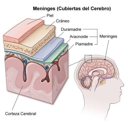 Medicina | Medicina | Pinterest | Medicina, Enfermería y Anatomía