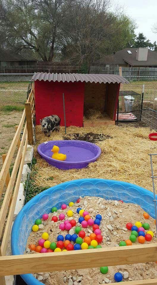 An idea for a pig pen Piggy Pics Pig pen, Pig farming, Pet pigs