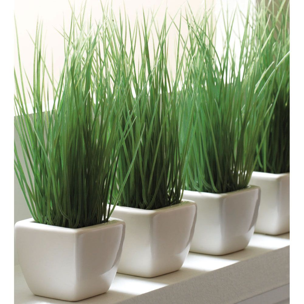 for decorating above the kitchen cabinet | Plants, Grass ...