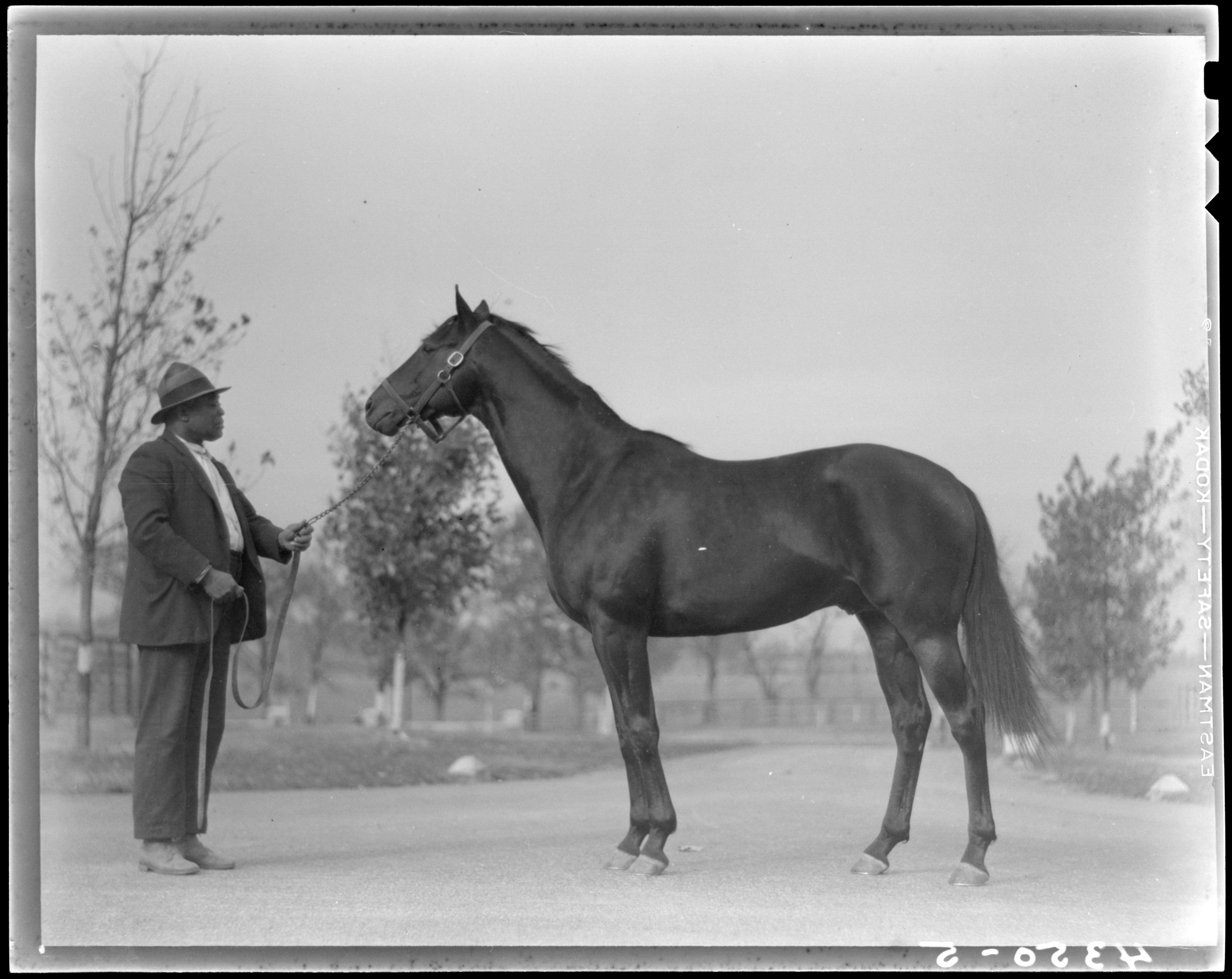War Admiral 4th Triple Crown Winner In U. S. History. His Sire Man 'O War Has Bred 3x3 To St. Simon Sire! Dam Also Has St. Simon In Her Pedigree.