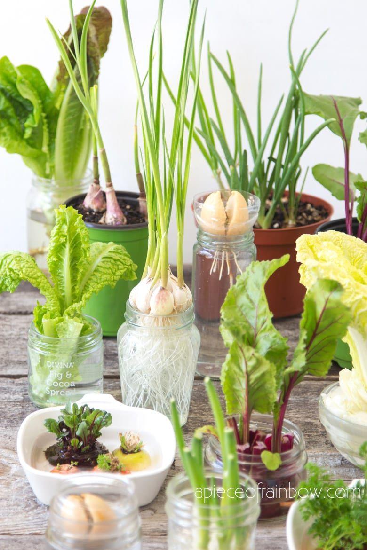 12 Best Veggies Herbs To Regrow From Kitchen Scraps Growing Vegetables Vegetable Garden Diy Indoor Water Garden