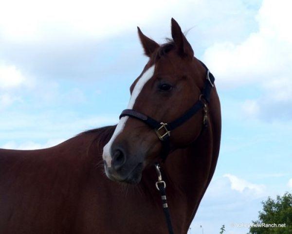 Rockets Little Pep - Sorrel Quarter Horse Mare