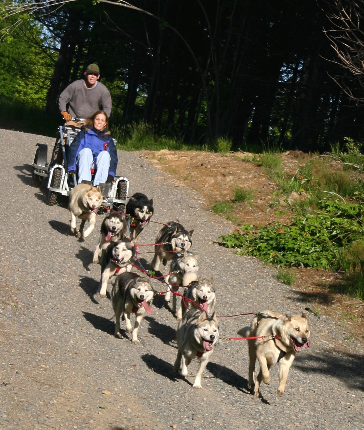 Husky Power Dogsledding Uses A Wheeled Dogsled To Entertain And