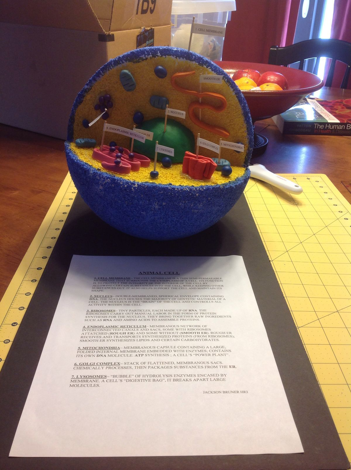 Middle School Life Science Worksheets Animal And Plant Cells - Animal cell project nice idea just a picture not instructions