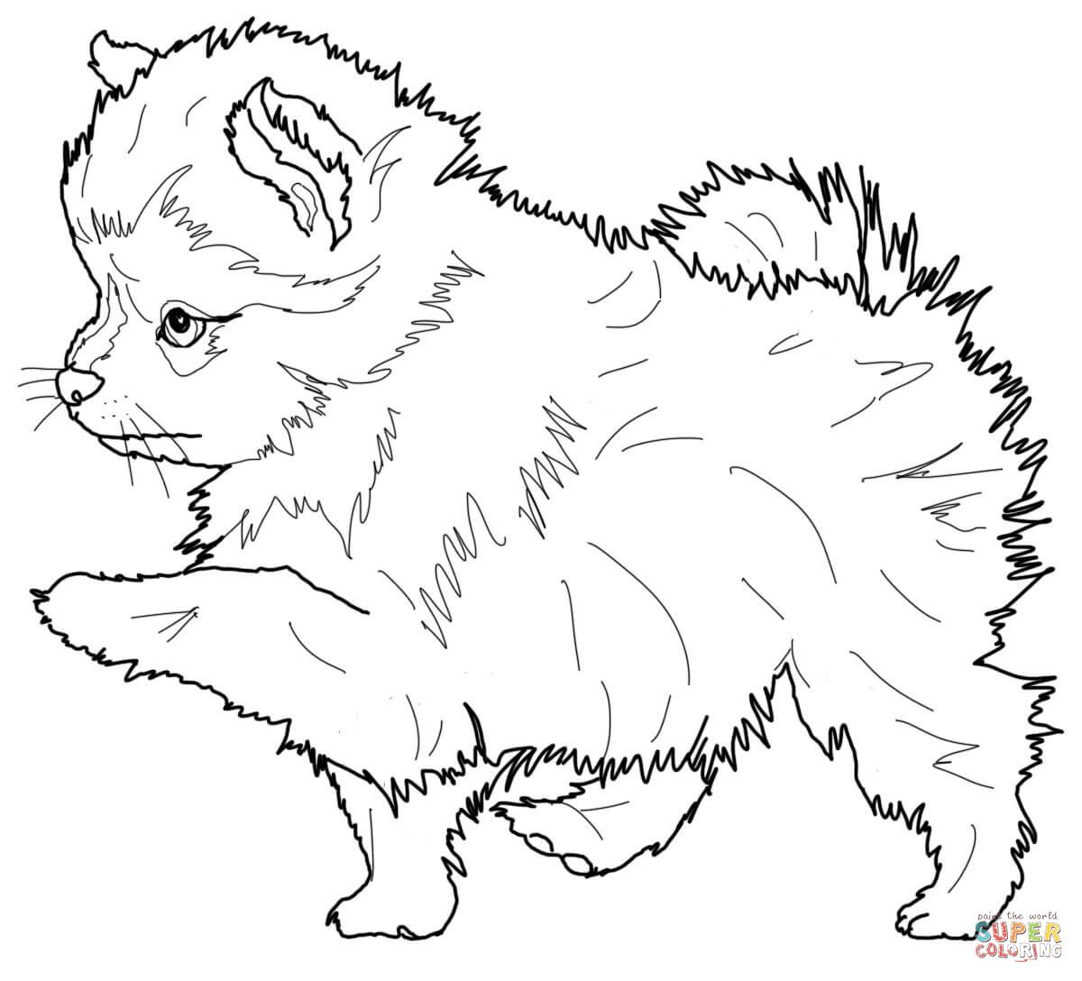 Pomeranian Puppy Puppy Coloring Pages Dog Coloring Page Horse Coloring Pages [ 1088 x 1200 Pixel ]
