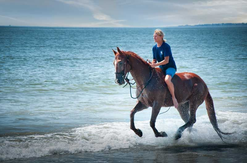 Horseback Riding On The Beach At Haig Point Daufuskie Island Sc Www Haigpoint Horse Southcarolina