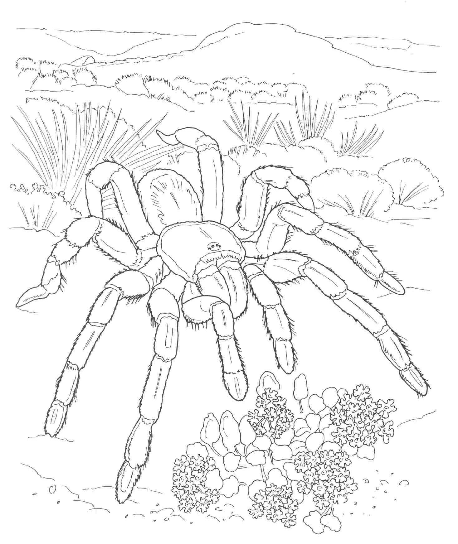 tartantula coloring pages for adults pinterest free