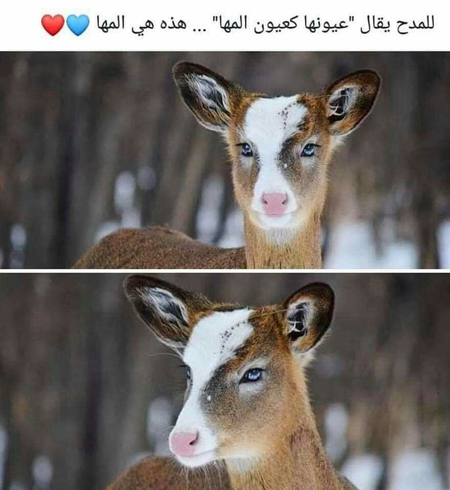 Pin By Uouo Oµo Uo U On Cute Animals Cute Animals Animals Cute
