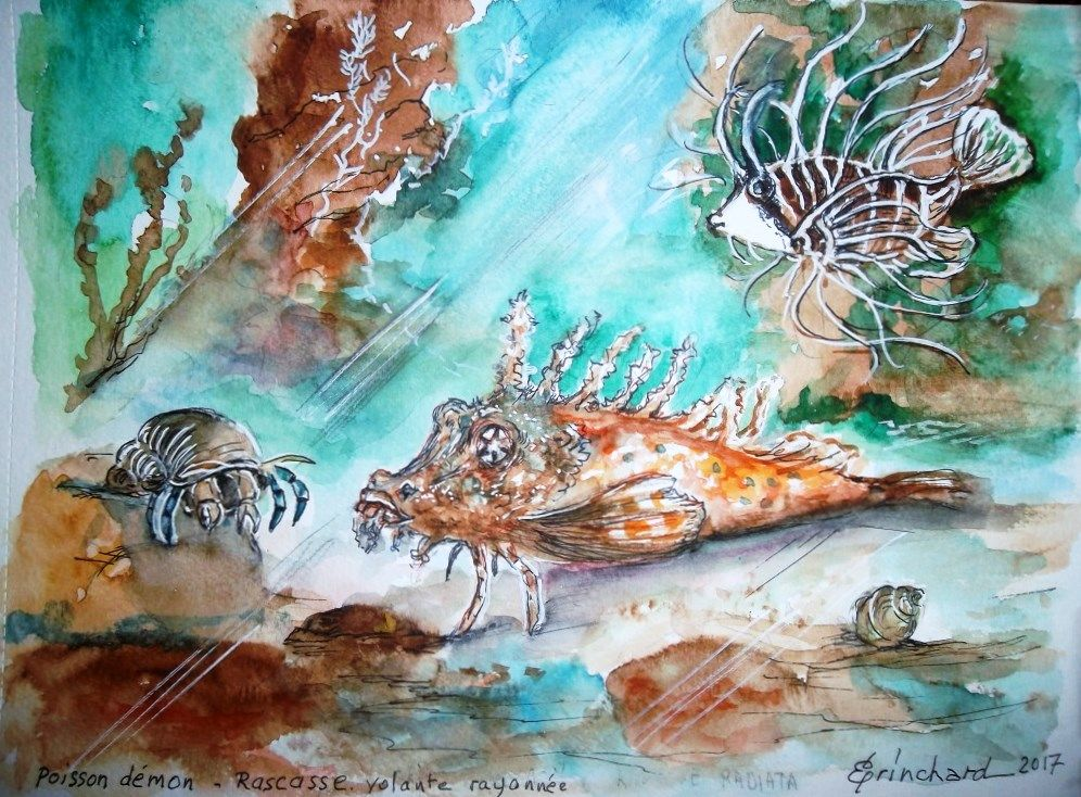 Poisson Demon Rascasse Volante Aquarelle Christian Eprinchard