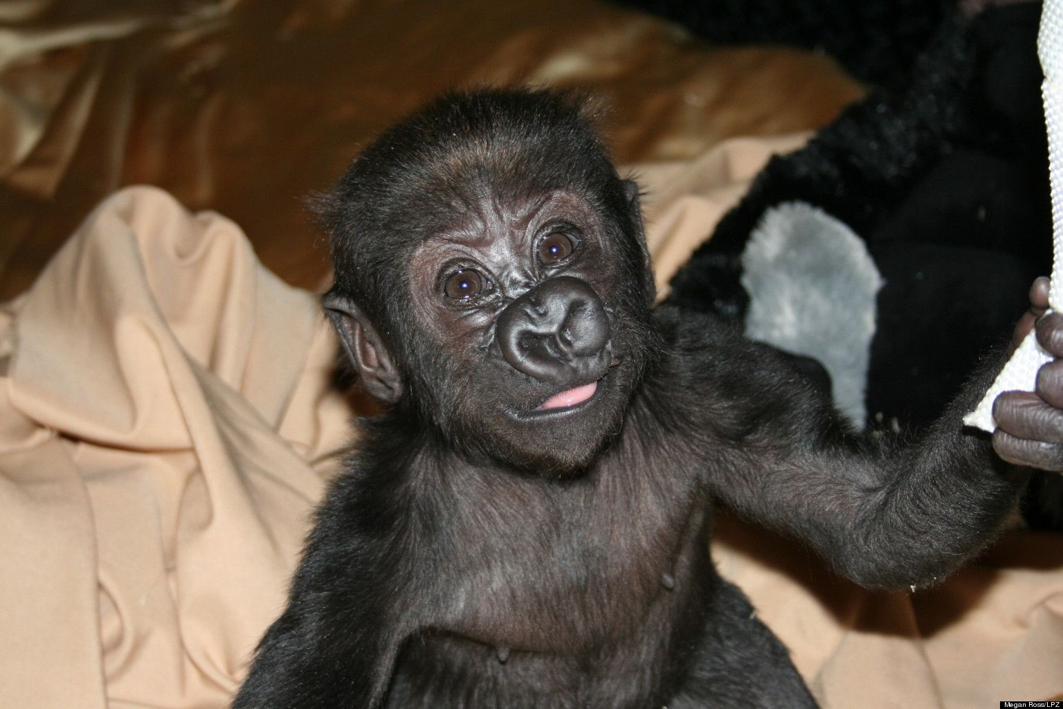 Lincoln Park Zoo Yahoo Image Search Results Animals