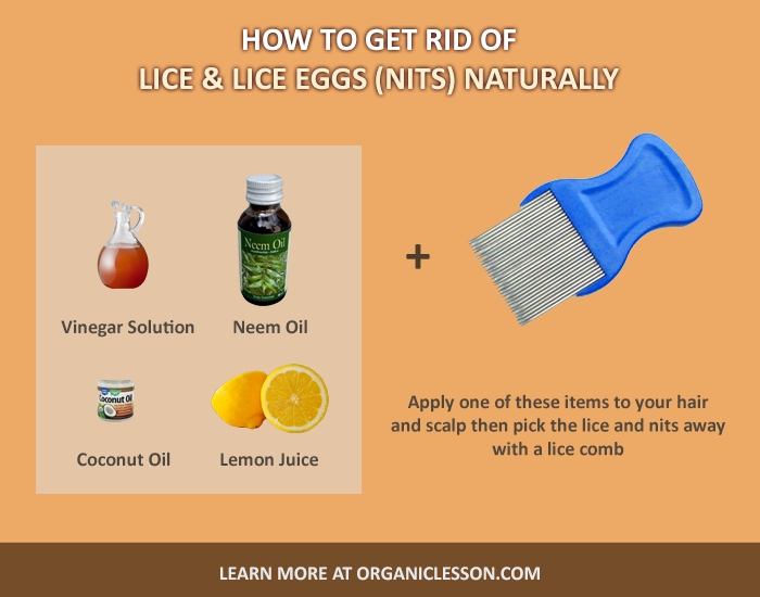 How To Get Lice Out Of Hair Home Remedies