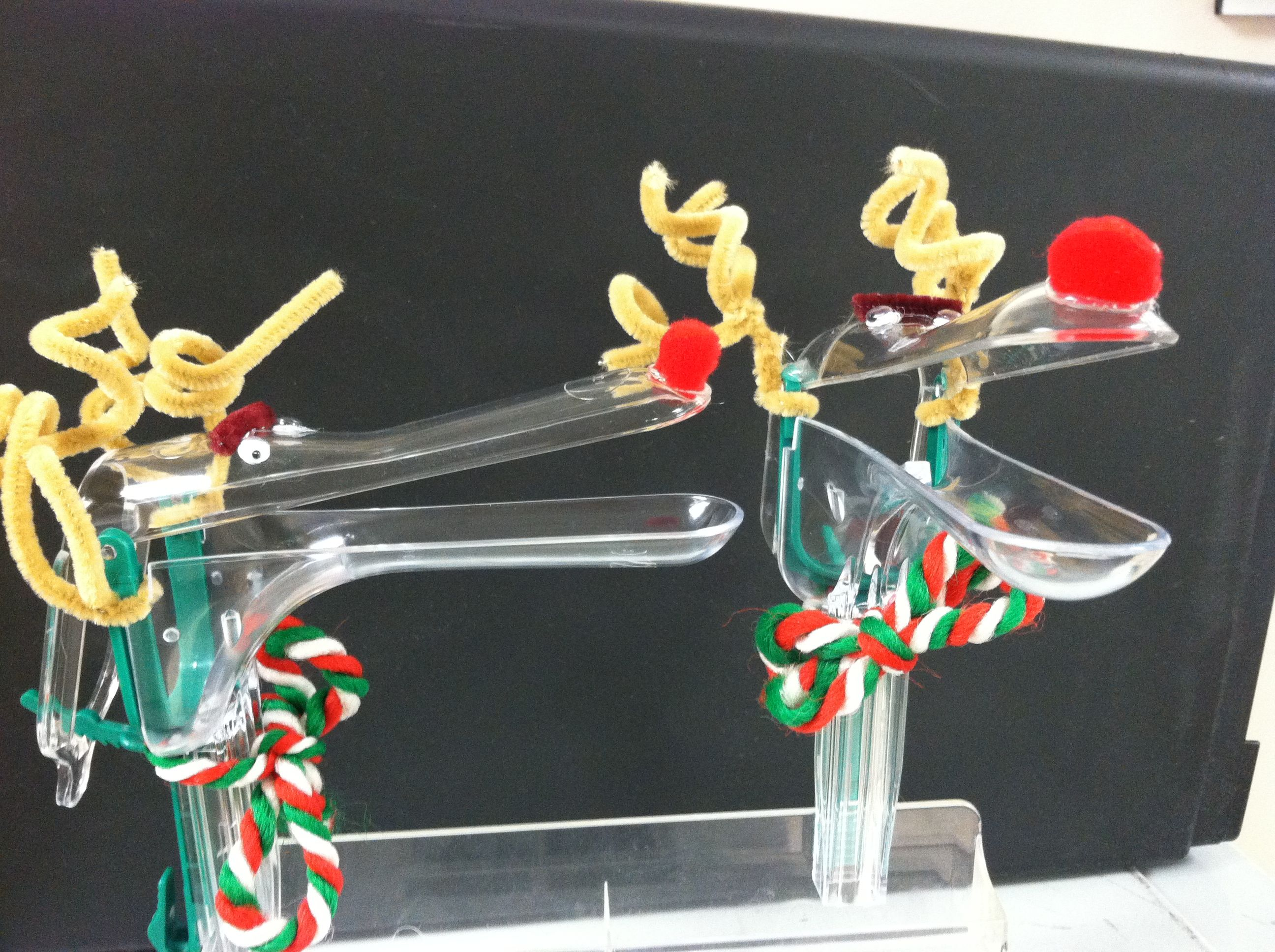 Reindeer Speculum. aka- reasons why I love my job ...