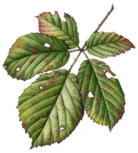 Julia Trickey leaf painting | Ботаника art | Pinterest | Tips ...