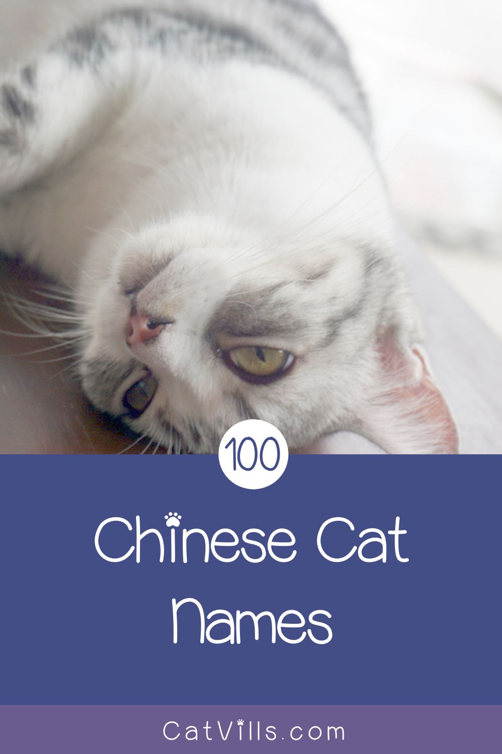 100 Exceptional Chinese Cat Names for Your New Kitten in