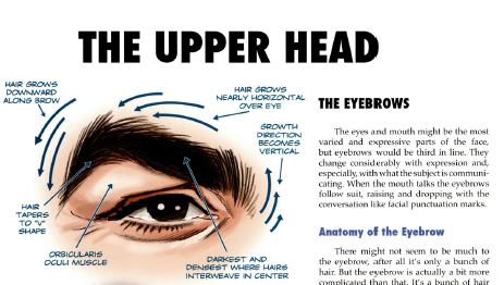 Pin By Maggie H On The Mad Art Of Caricature Tom Richmond Caricature Face Drawing Head Anatomy