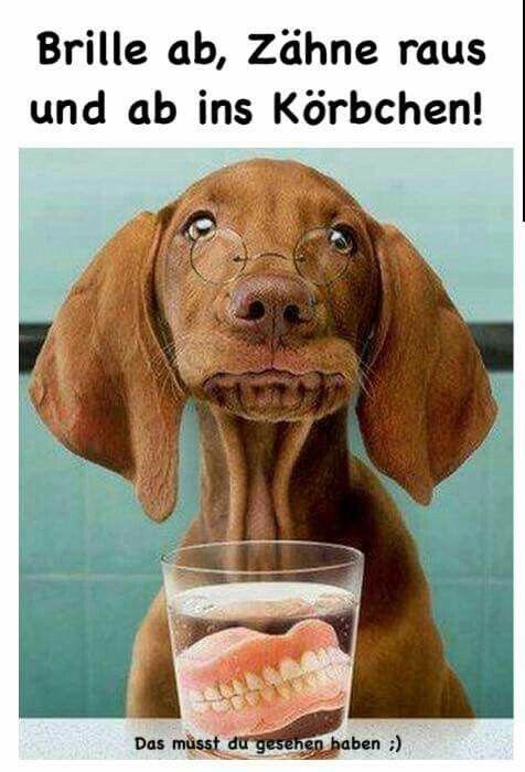 Lustiges Jokes Bild Von Johanna M Lustig Bilder Hundebilder