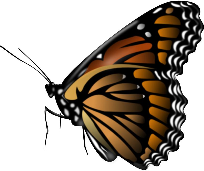 monarch butterfly animation monarch butterfly clip art monarch rh pinterest com au moving butterfly clipart animated butterfly clipart free