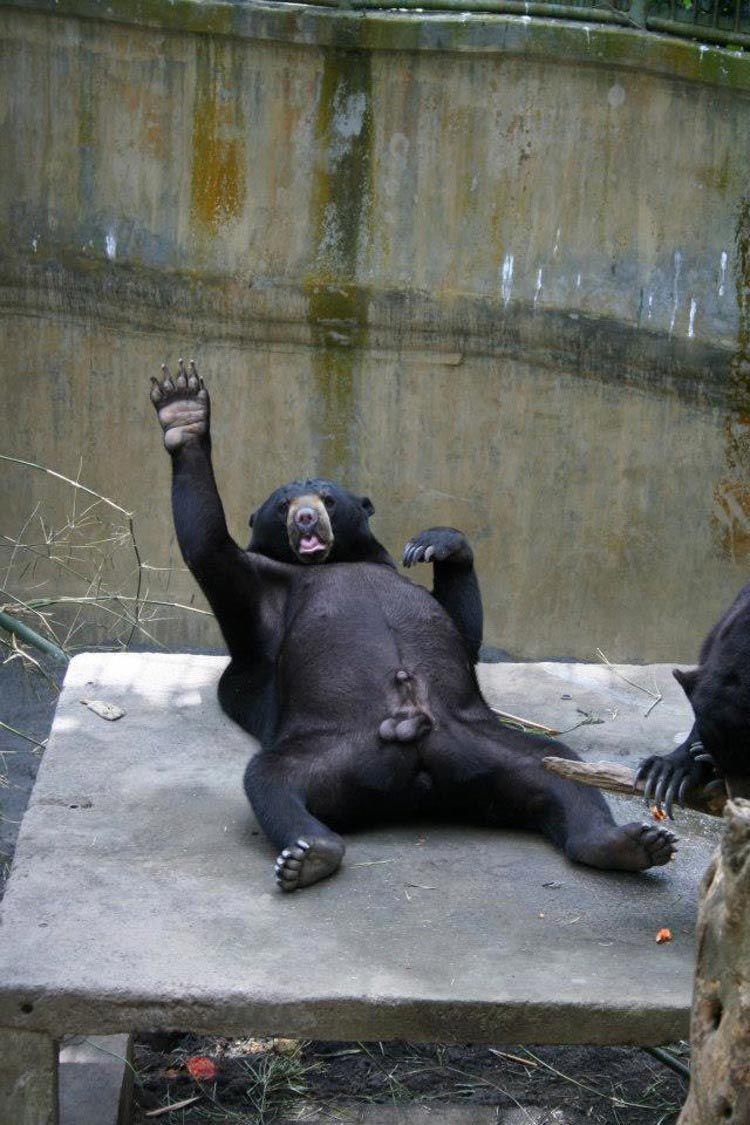 Прикольные картинки про зоопарк