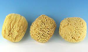 Sea Sponge Sampler S Izobrazheniyami
