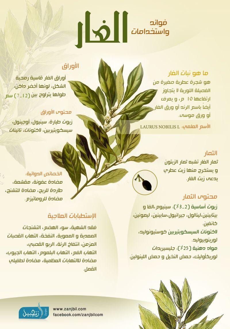 انفوغراف فوائد و استخدامات الغار الرند Herbs For Health Health Facts Fitness Health Fitness Nutrition