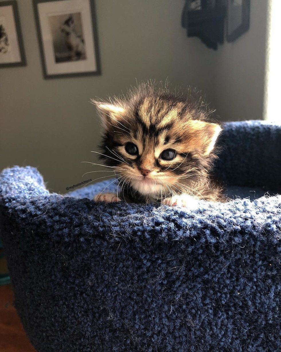 Kitten Found Abandoned in a Bush Just Hours Old, Has Her