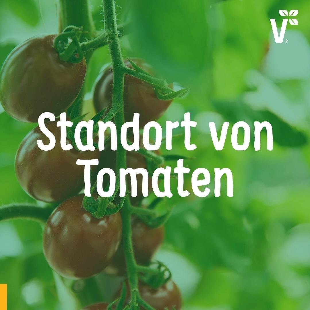 6 Tipps: Tomaten anbauen – der beste Standort für Tomaten