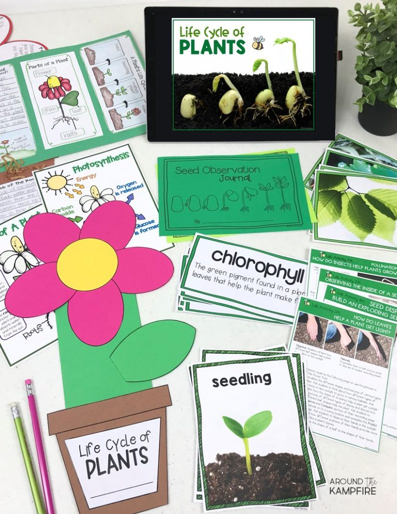 Plant Life Cycle Activities Writing About Science A Freebie Around The Kampfire Plants Life Cycle Activities Plant Life Cycle Life Cycles [ 1024 x 791 Pixel ]