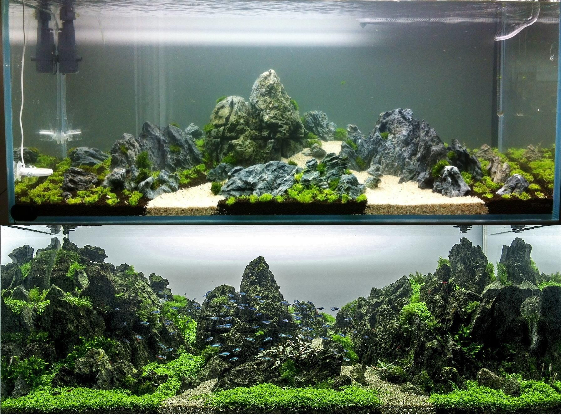 From The Start To Finish Aquascape By Greg Charlet