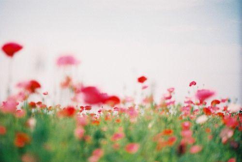 Imagen de bloom, photography, and blossom
