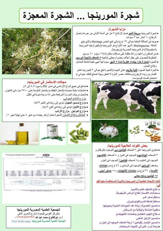 Facebook Zija Facebook Face