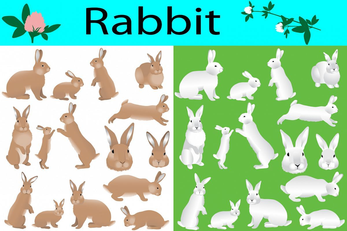 Collection of rabbits and its cubs in colour image in 2020