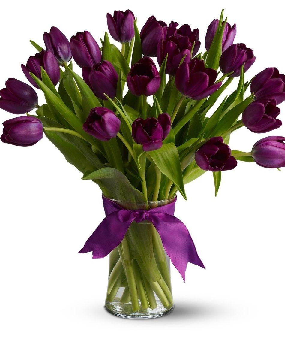 Holland Purple Tulips Allens Flowers And Plants Florist