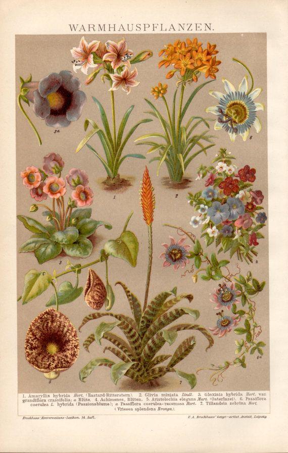 1898 Tropical Plants Antique Print, Vintage Lithograph, Botanical Illustration, Passiflora, Bromeliad, Amaryllis, Gloxinia, Achimenes