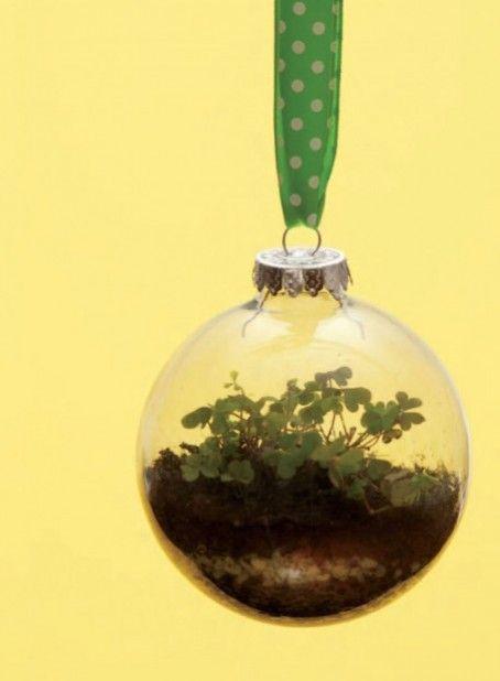 Neat terrarium idea!