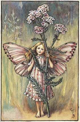 Illustration for the Yarrow Fairy from Flower Fairies of the Summer. A girl fairy stands facing front holding a yarrow flower.    Author / Illustrator  Cicely Mary Barker