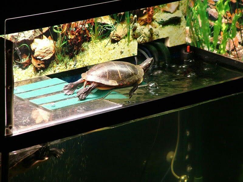 Pin by Janine on aquatics Turtle dock, Pet turtle