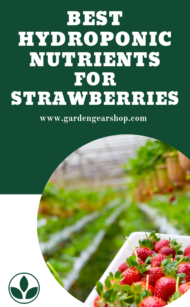 Best Nutrients For Hydroponic Strawberries Hydroponic Strawberries Hydroponics Strawberry Fertilizer