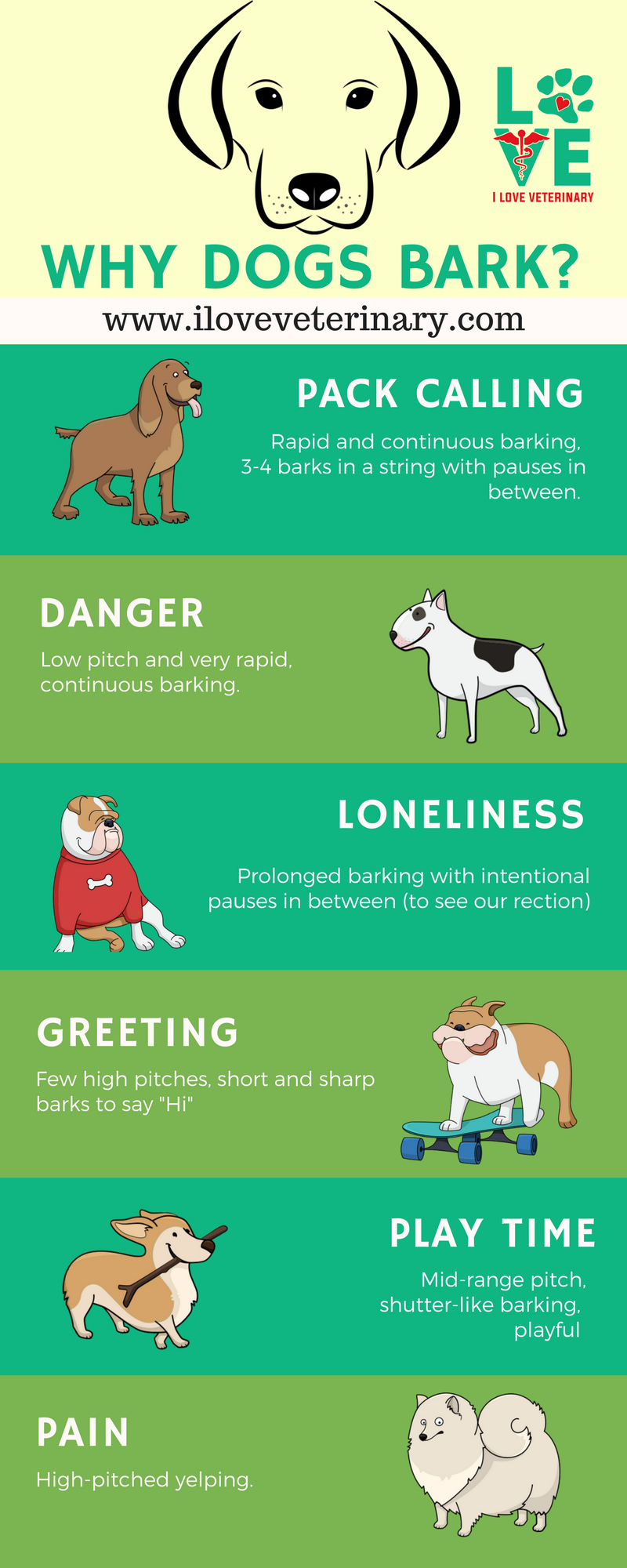 Why Dogs Bark Infographic Dog Barking Dog Training Dog Training Treats