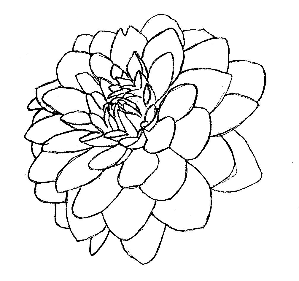 Dahlia Flower Line Drawing : Purple dahlia line art wip by robouser on deviantart