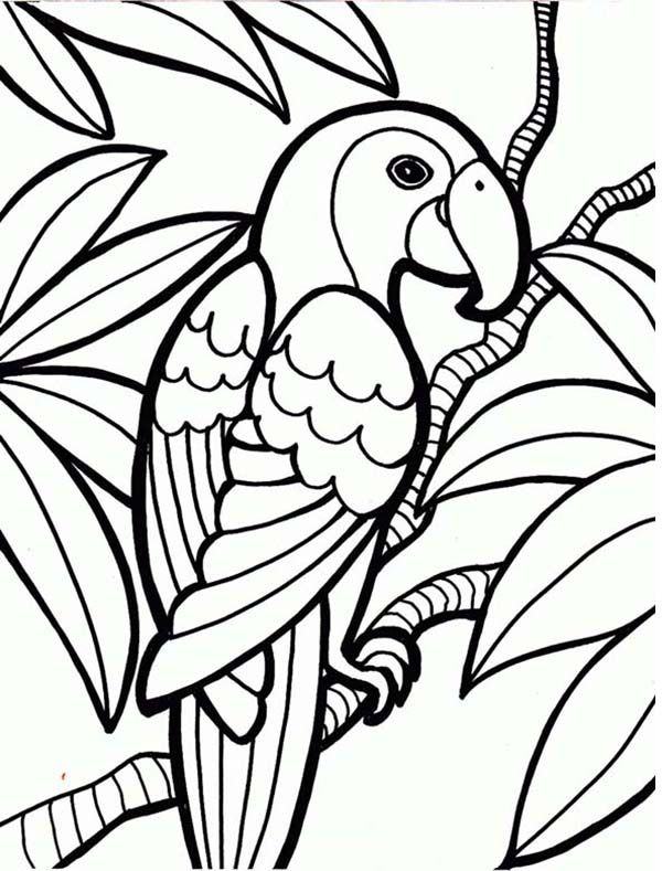 Parrot Rainforest Parrot Coloring Page Animal Coloring Pages