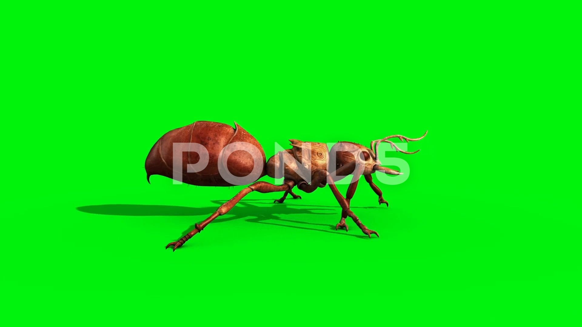 Ant Insect Walkcycle Side Green Screen 3d Rendering Animation Stock Footage Ad Side Green Walkcycle Ant In 2020 Ant Insect Greenscreen Abstract