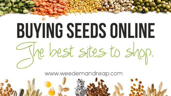 Buying Seeds Online The Best Websites Buy Seeds Online Seeds