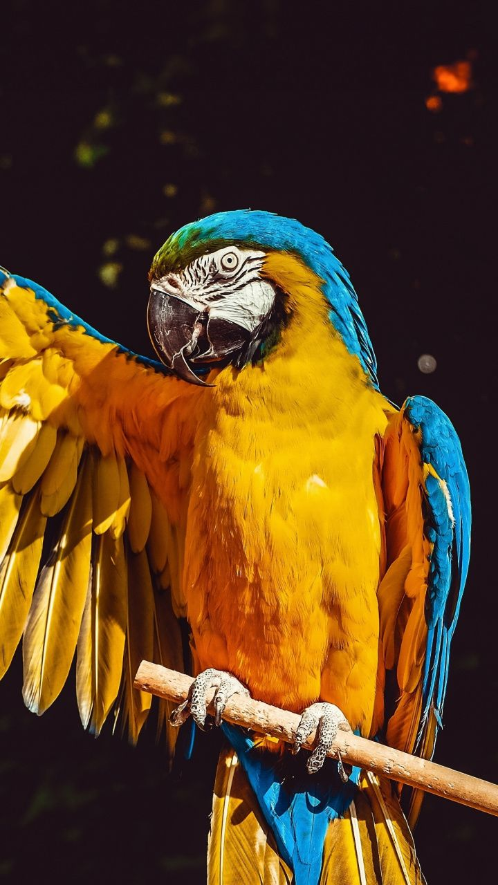 Colorful, macaw, parrot, 720x1280 wallpaper Bird