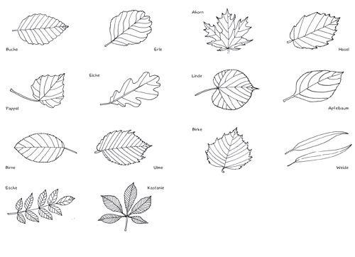 Mini Worterbucher Pflanzen Pdf Geometrisches Tattoo Pflanzen Ausmalen